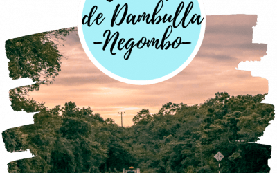Como ir de Dambulla a Negombo