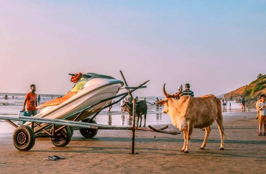 mejor epoca para viajar a la india