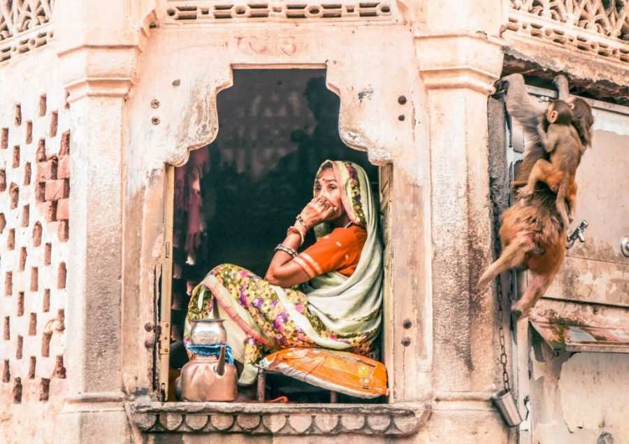 templo de los monos Jaipur