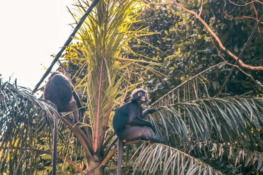 Monos en la entrada a las Seven Wells