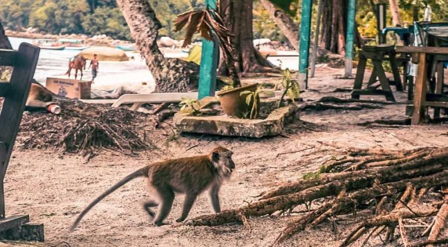 guia parque nacional penang