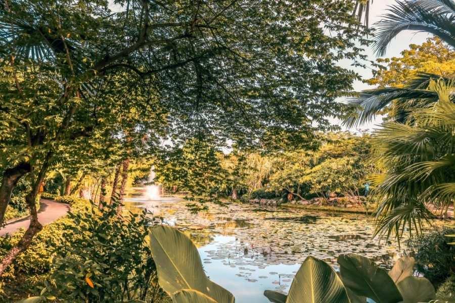 arboles singapur
