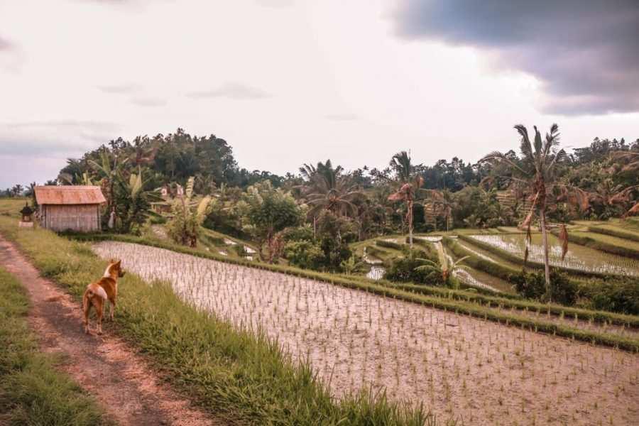 arrozales jatiluwih
