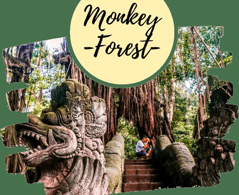 Bosque de los Monos Bali