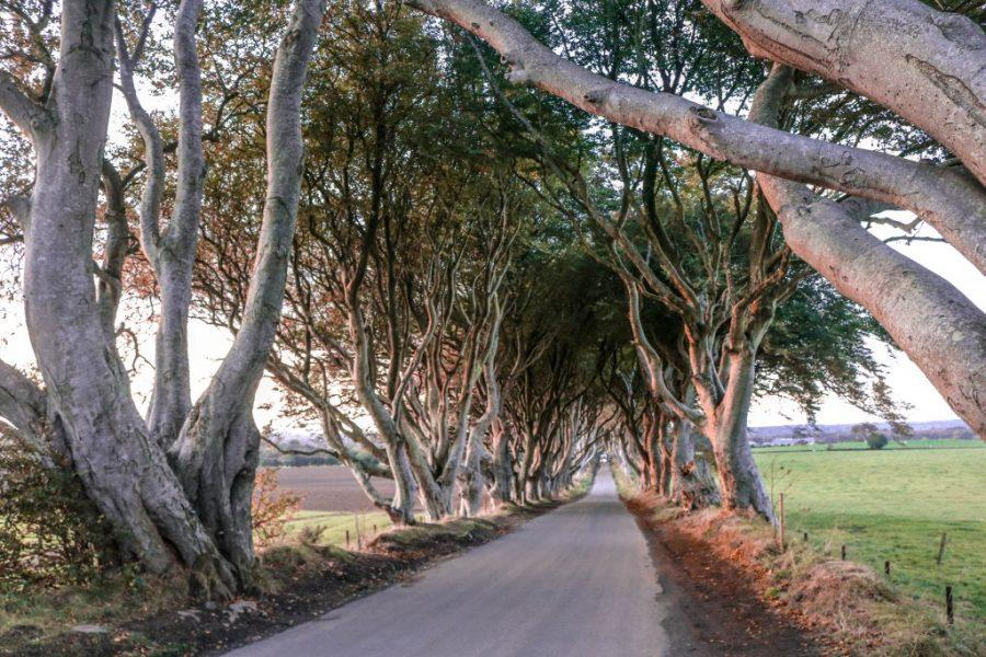 Camino Dark Hedges