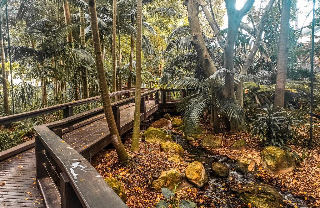 Rainforest Walk Southbank