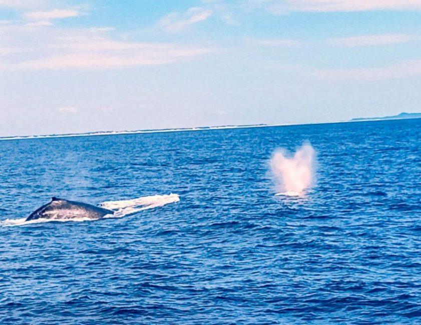 Tour de observación de ballenas en la Gold Coast