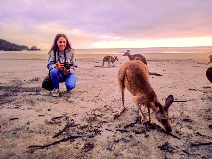 canguros en Cape Hillsborough