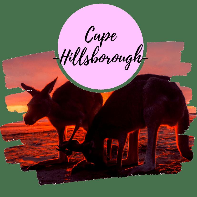 Ver canguros en Cape Hillsborough